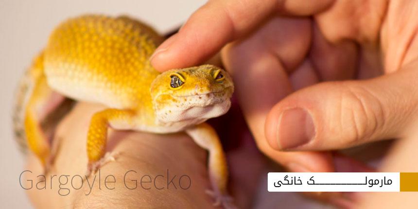 gargoyle-gecko-1
