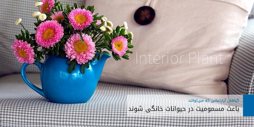 interior-plant-1