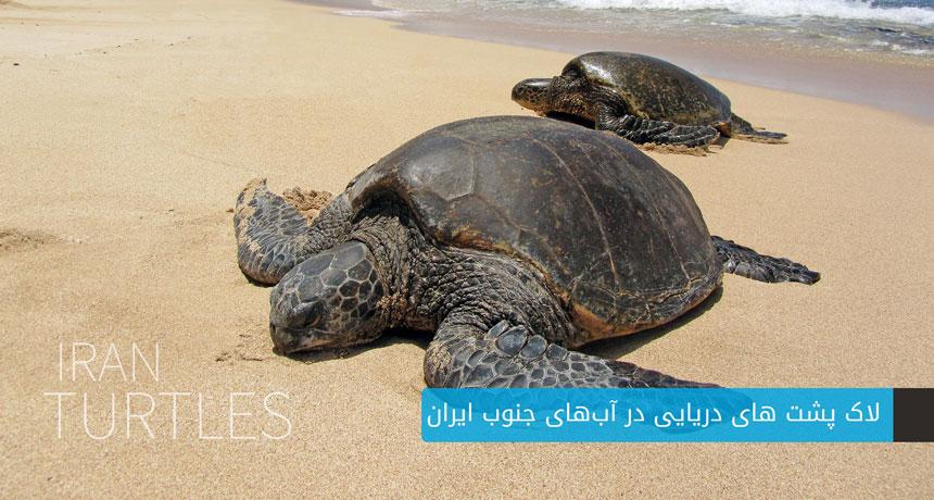 لاک پشت های دریایی ایران