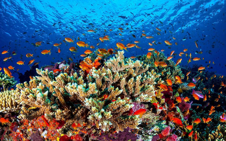 the-great-barrier-reef-2