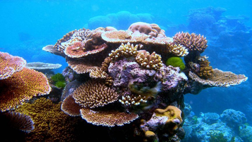 the-great-barrier-reef