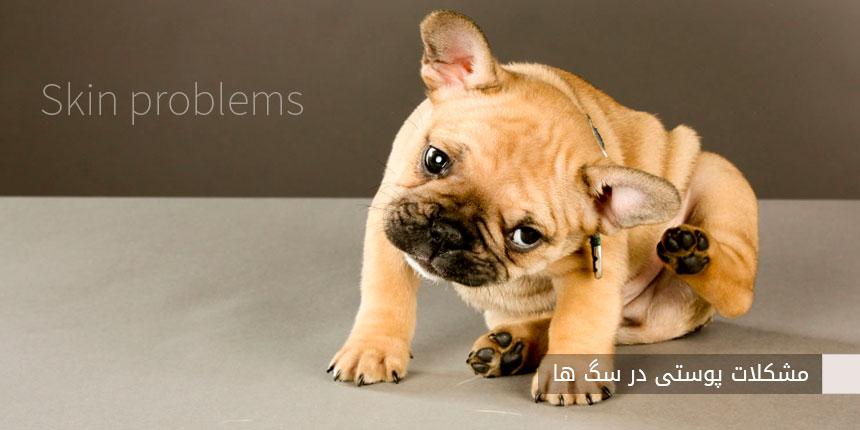 مشکلات پوستی در سگ ها