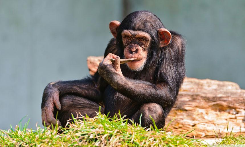 space-chimps-4