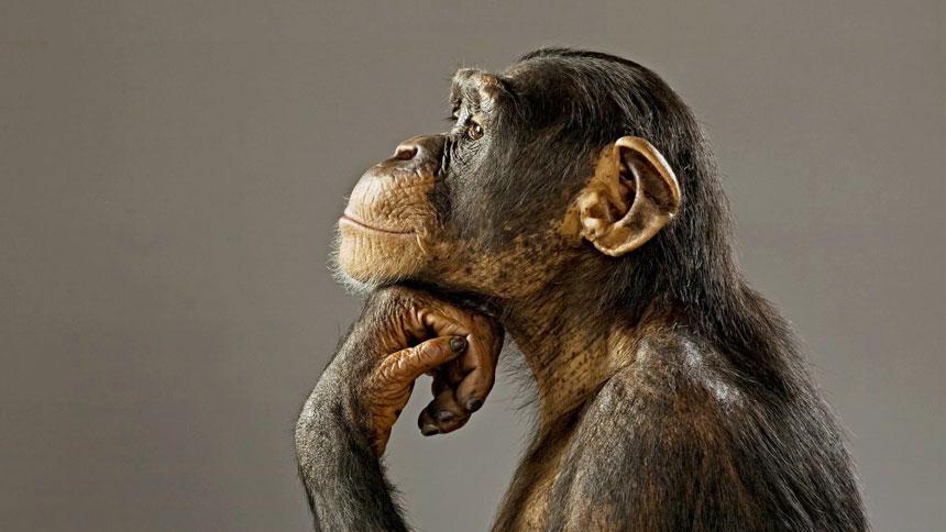 space-chimps-5
