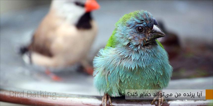 حمام کردن پرنده