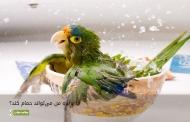 آیا پرنده من میتواند حمام کند؟