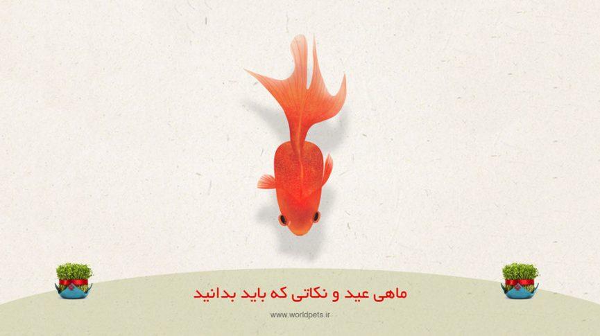 ماهی قرمز و سوالات شب عیدی