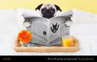 غذاي خانگي براي سگ - چندين نوع غذاي روزانه و نكات مرتبط