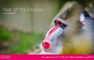 شناختی بر میمونها به بهانه سال 1395، که سال میمون بود