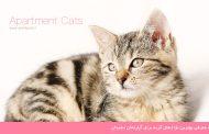 معرفی بهترین نژادهای گربه برای آپارتمان نشینان