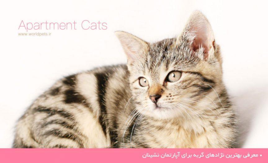 گربه های آپارتمانی
