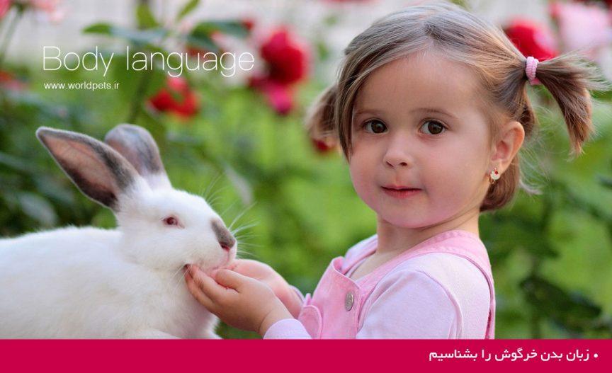 زبان بدن خرگوش را بشناسیم