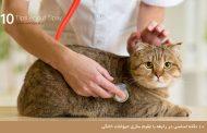 ۱۰ نکته اساسی در رابطه با عقیم سازی حیوانات خانگی