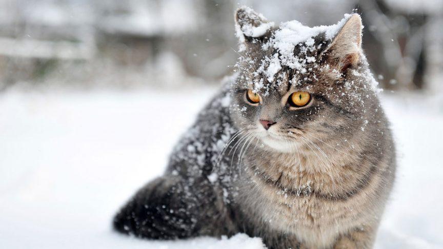 توجه به سلامت پوست حیوانات خانگی در زمستان