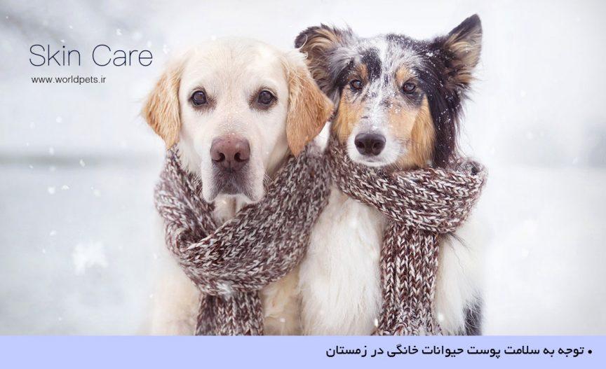 مراقبت از پوست حيوانات خانگي در زمستان