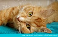 درماتیت تماسی آلرژیک و تحریکی در گربهها یا همان التهاب پوست