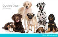 معرفی نژادهای سگ با طول عمر بالا