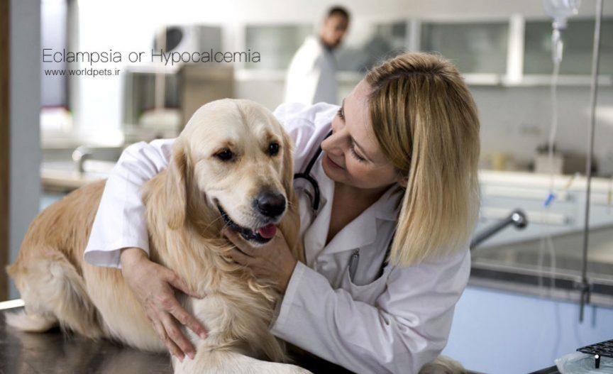 اکلامپسی یا هیپوکلسمی پس از زایمان در سگ