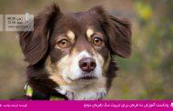 پادکست آموزش ده فرمان برای تربیت سگ (فرمان دوم)