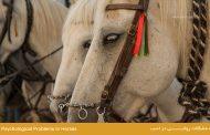 مشكلات رواني در اسب