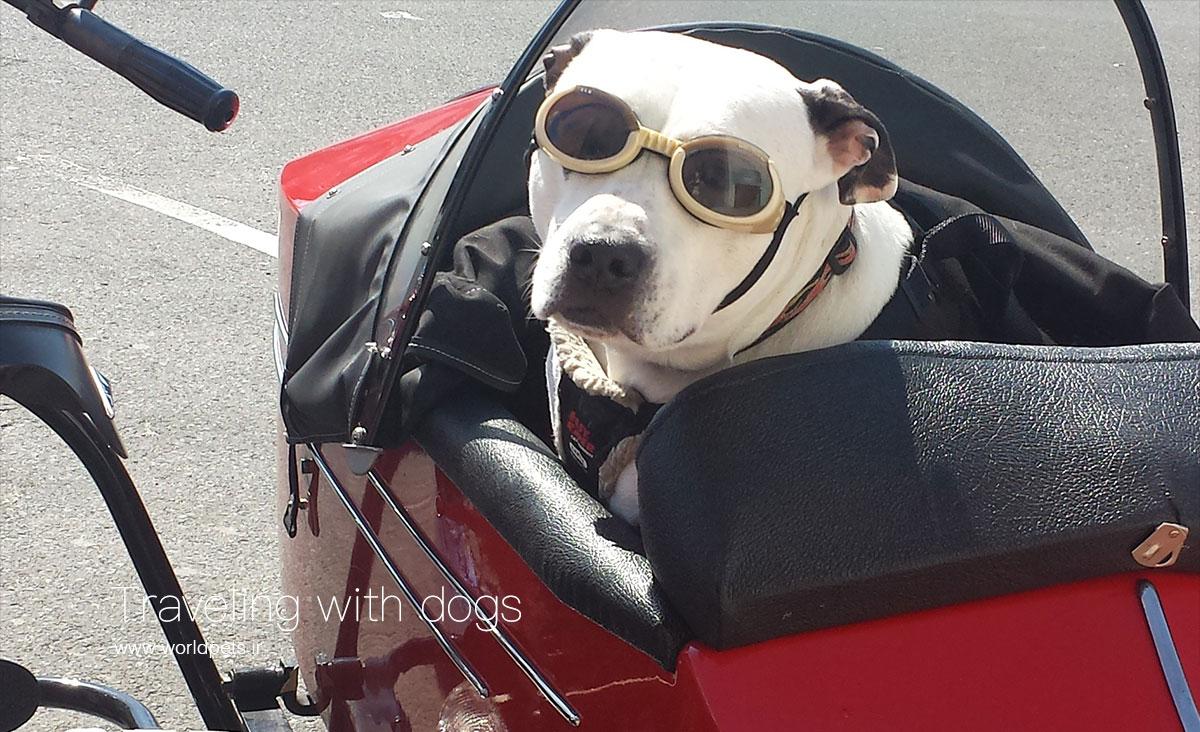 ۱۰ نکته بسیار مهم برای مسافرت به همراه سگها