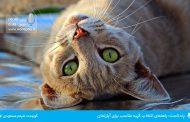 پادکست: راهنمای انتخاب گربه مناسب برای آپارتمان