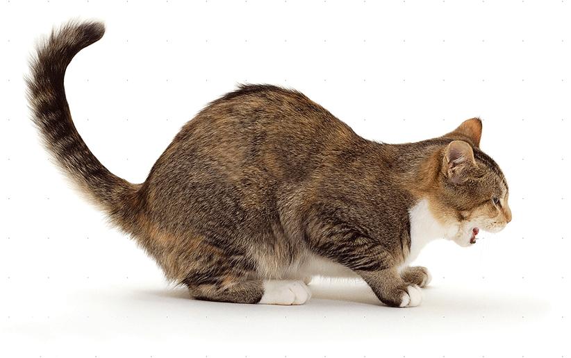 راهنمای دقیق رفتار و حرکات گربهها و معانی آنها