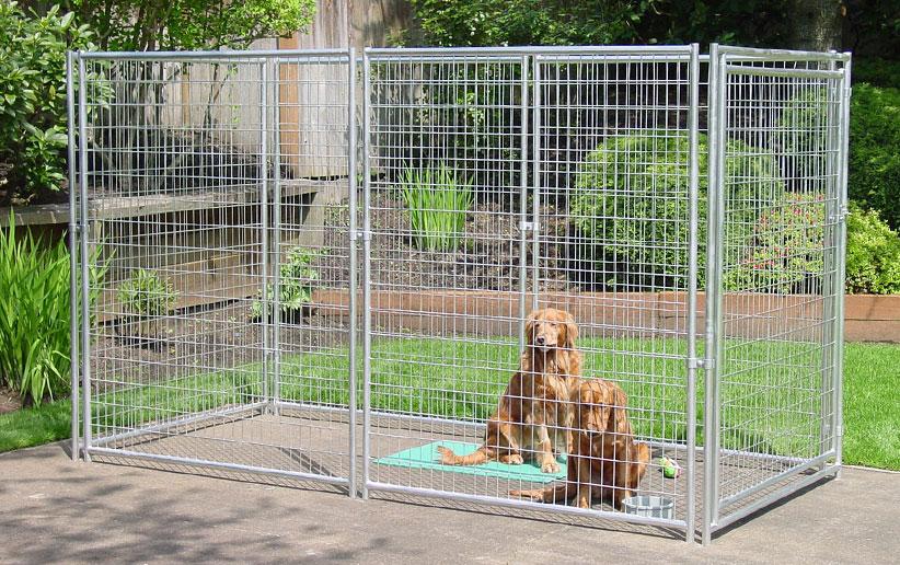 ۱۱ گام مهم برای تمیز کردن قفس سگ