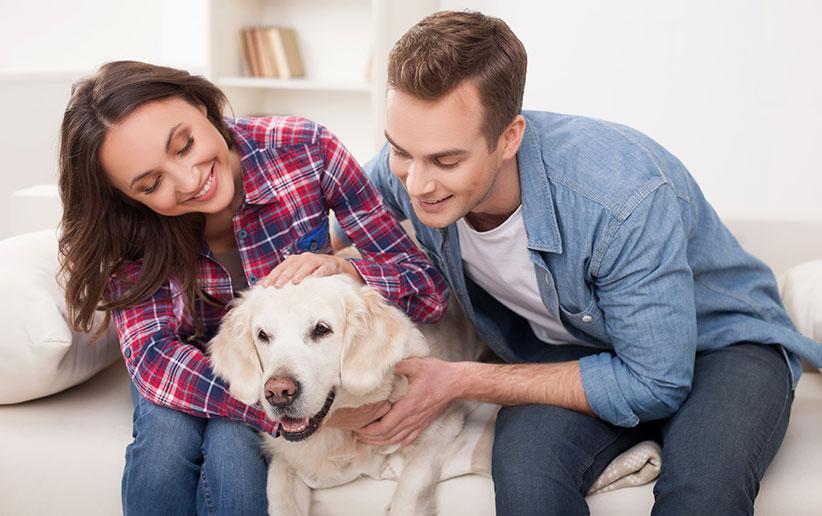 سیستم بویایی سگ و رازهای پنهان آن
