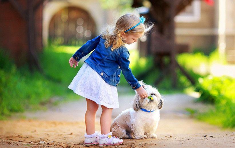 سیستم بویایی سگ و رازهای پنهان آن!
