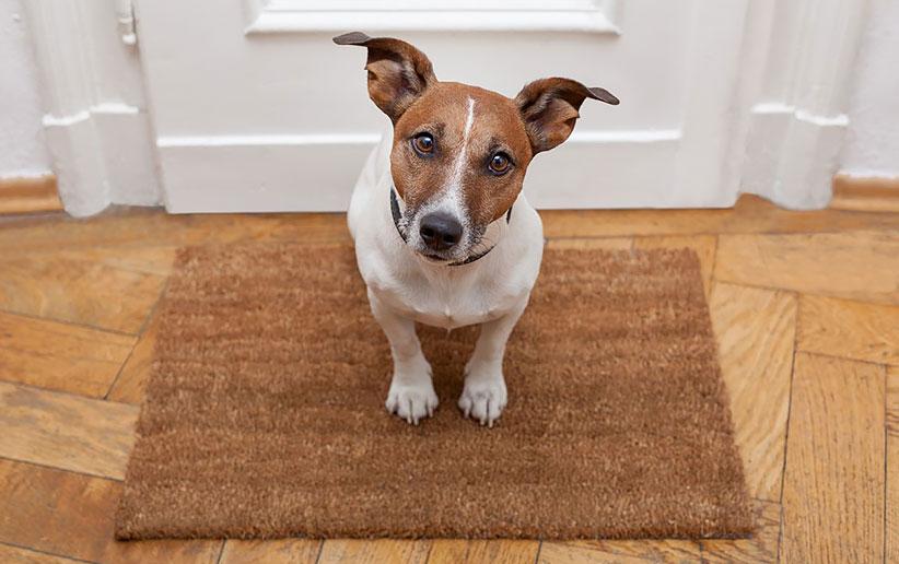 روشهای طلایی تشخیص ترس در سگها