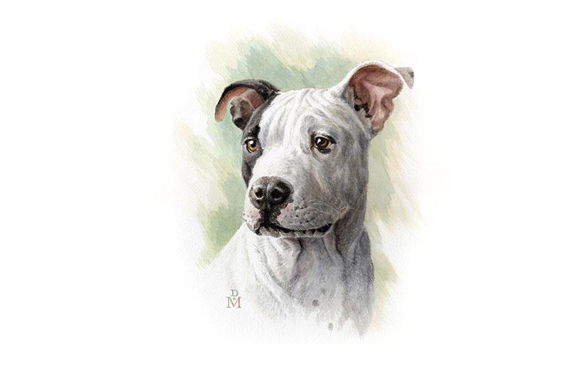 آموزش نقاشی از سگ و فوت و فنهای کلیدی آن