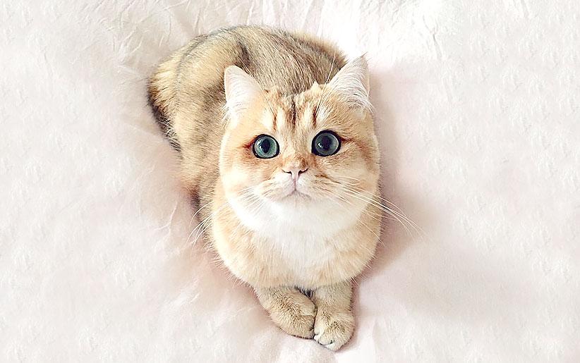 ۶ علامتی که نشان میدهد حوصله گربه شما سر رفته!