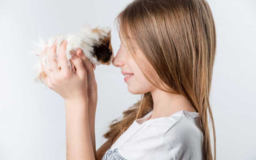 خوکچه هندی در دستان دختر بچه