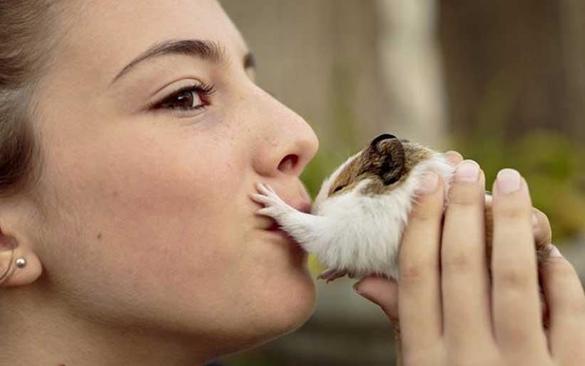 دختری که خوکچه هندی را میبوسد