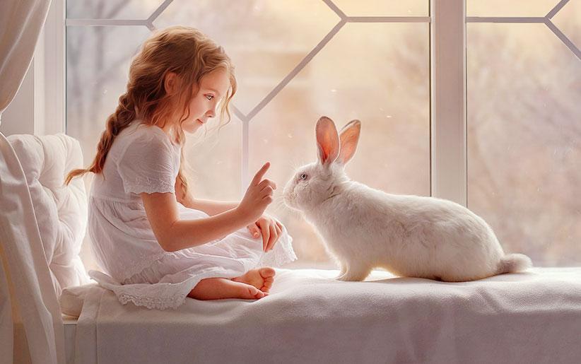راهنمای کامل زبان و حرکات بدن خرگوش