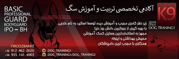 آکادمی تخصصی تربیت و آموزش سگ