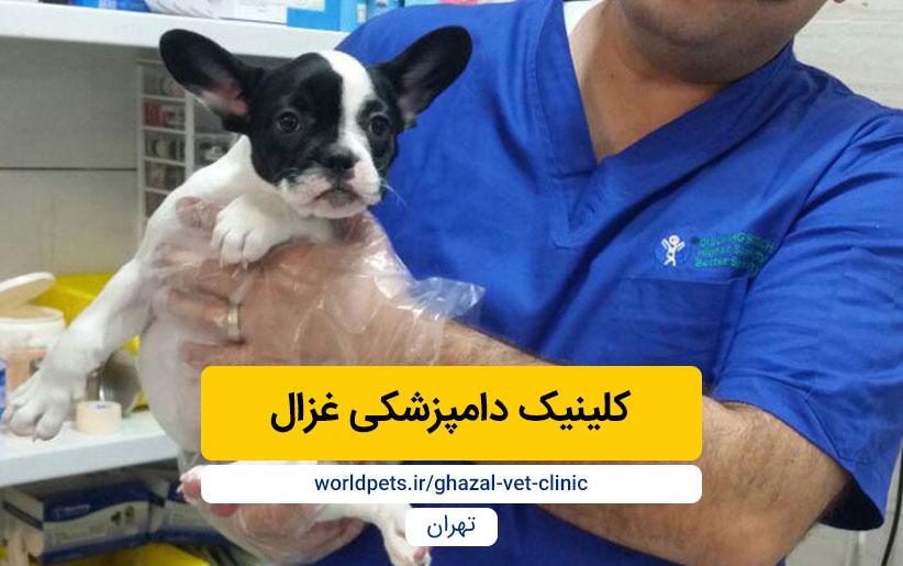 کلینیک دامپزشکی غزال (تهران)