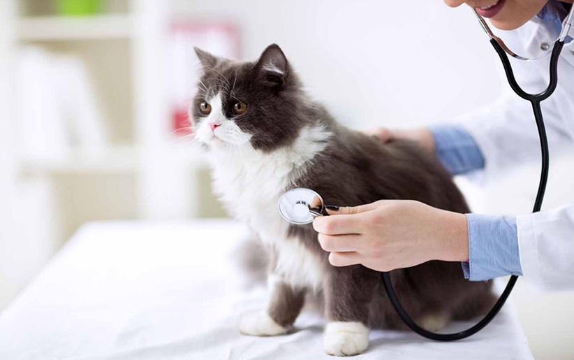 علائم توکسوپلاسموز در گربه