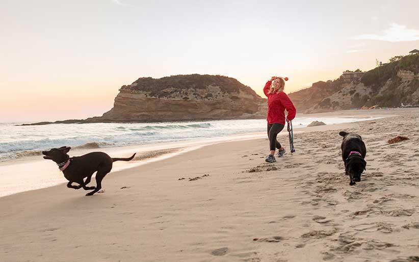 تمرین گرفتن و پرت کردن اجسام برای سگها در کنار ساحل دریا به وسیله یک زن