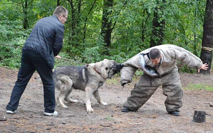 آموزش و تربیت سگ برای گرفتن