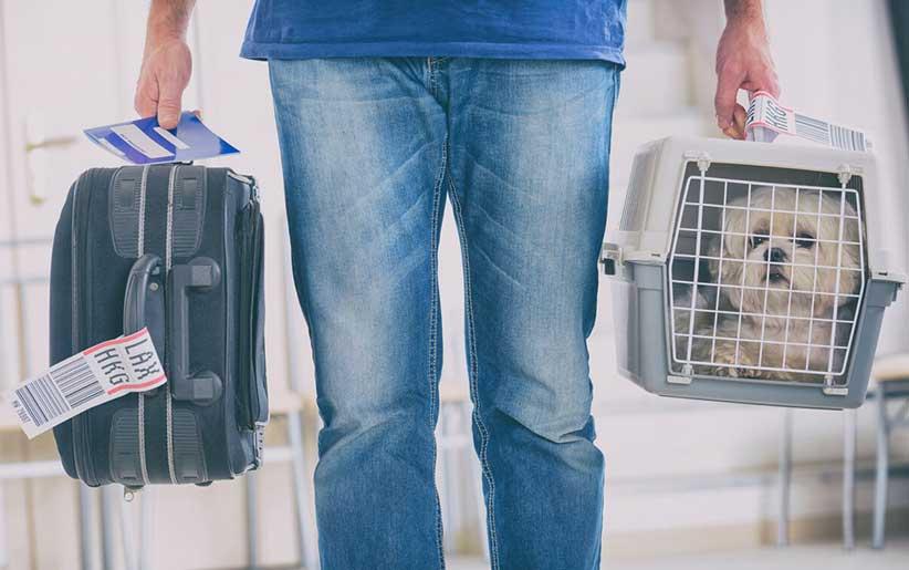 در یک دست قفس مهاجرت سگ و در دست دیگر چمدان