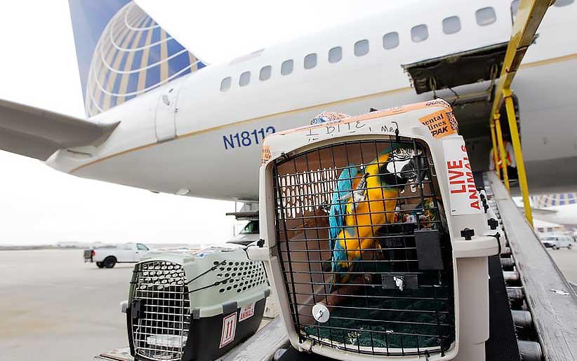 قفس طوطی در حال انتقال به داخل هواپیما