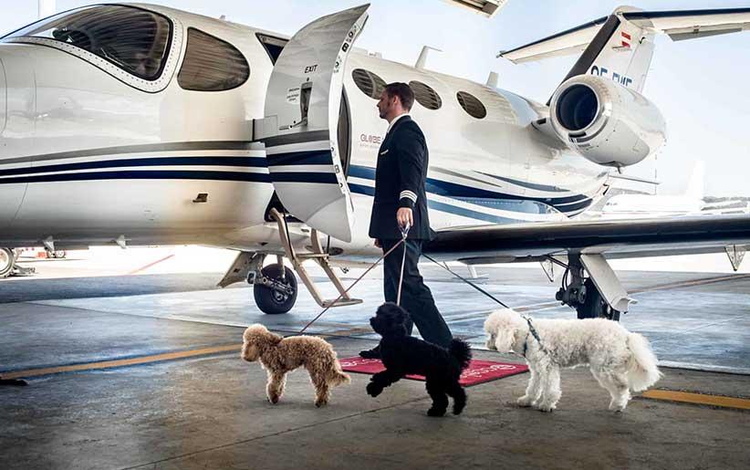 مهاجرت و انتقال سگهای خانگی به داخل هواپیما